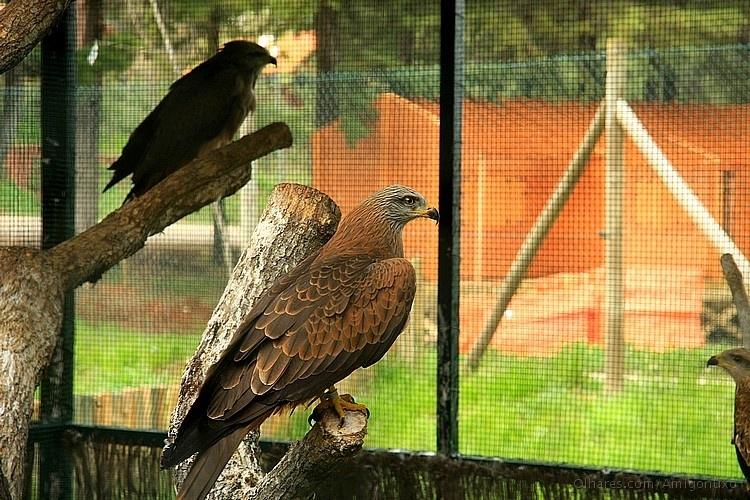 campismo parque biológico de vinhais.jpg